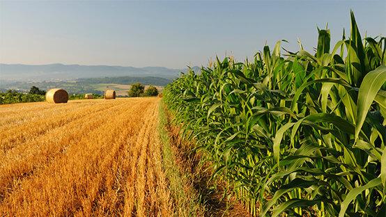 Servizi e Gestioni in Agricoltura
