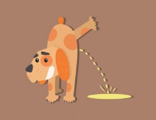Condominio: deiezioni dei cani negli spazi comuni, come comportarsi